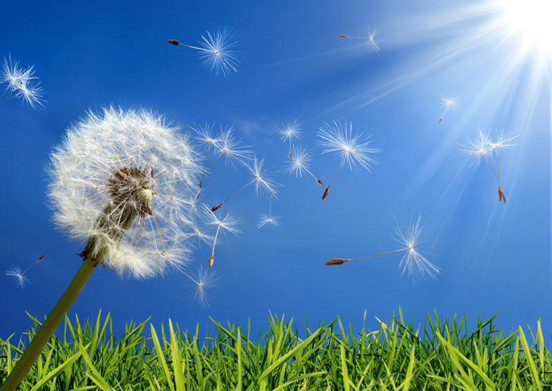 Lessen Your Seasonal Allergies Through the Spring with These Tips