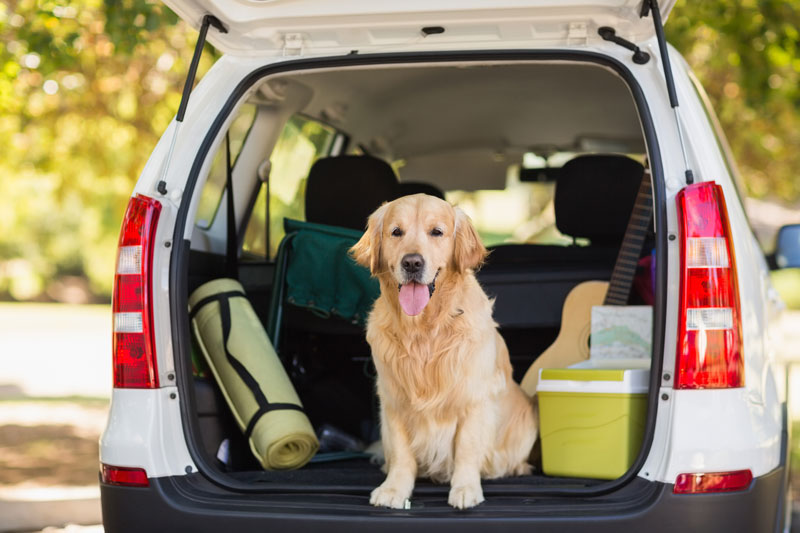 Make Your Road Trips with Your Pets Easier with These Tips
