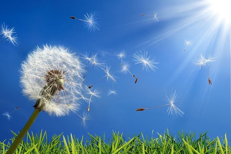 Tips to Help You Deal with Seasonal Allergies